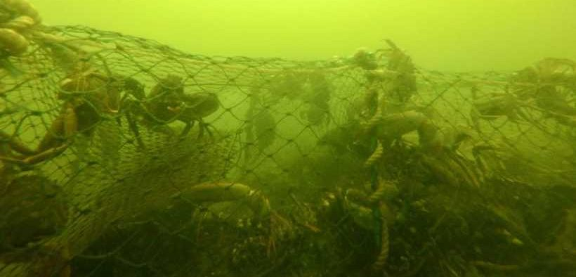 PUBLIC INVITED TO HELP TRACK DOWN GHOST NETS