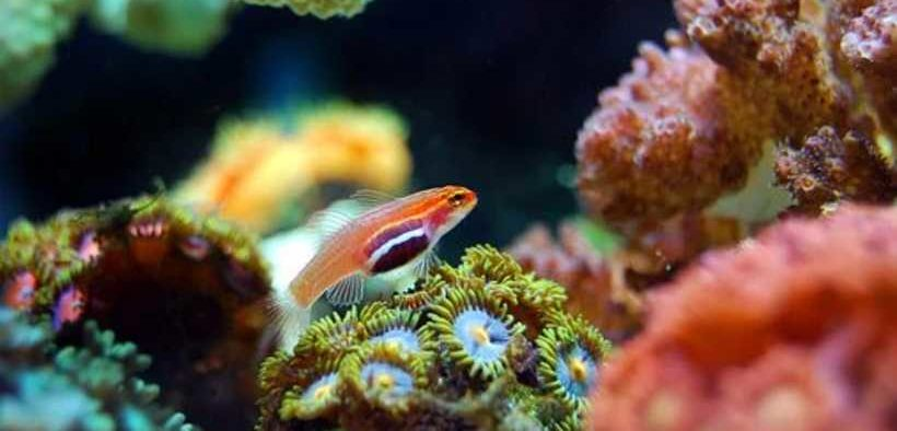 TIME RUNNING OUT TO SAVE CORAL REEFS