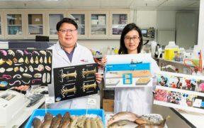 Trawl ban boosts marine diversity in Hong Kong waters