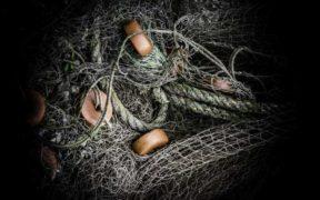 UK'S FIRST WILDLIFE BYCATCH MITIGATION HUB