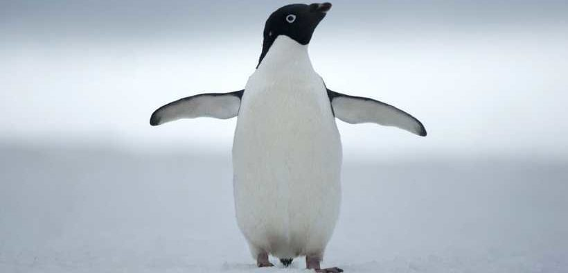WORLD LEADERS COMMIT TO AMBITIOUS ANTARCTIC