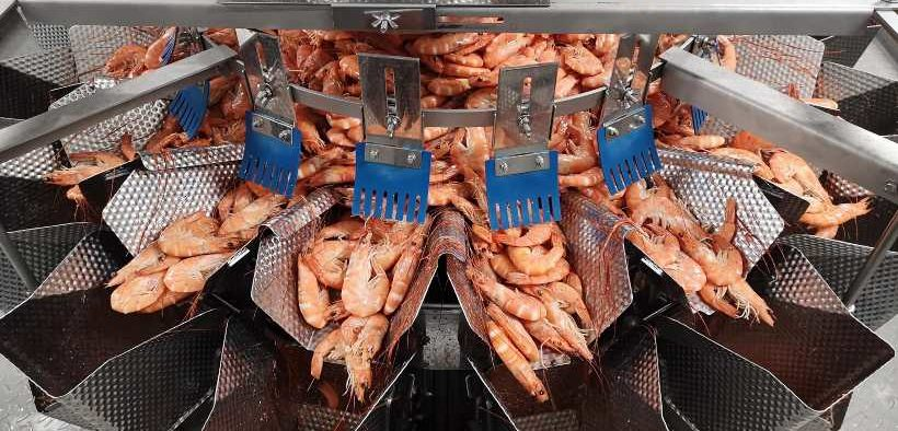 COMPLETE PACKING LINE SOLUTION FOR LANGOUSTINES