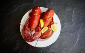 Certification yields greater resilience for the Bahamas lobster