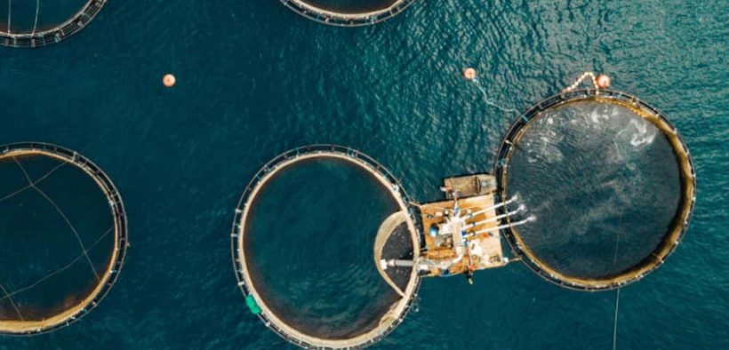 EIT Food announces new projects to accelerate innovation in sustainable aquaculture