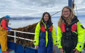 First Seaweed Harvest from Scalpay Project