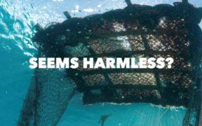 MANAGEMENT OF DRIFTING FISH AGGREGATING