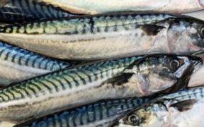 SCOTTISH FISHERMEN URGE HALT