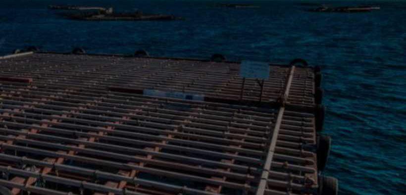 SHELLFISH TAKE TOTHE OPEN SEAS