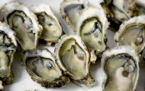 Stressed-out young oysters may grow less meat on their shells