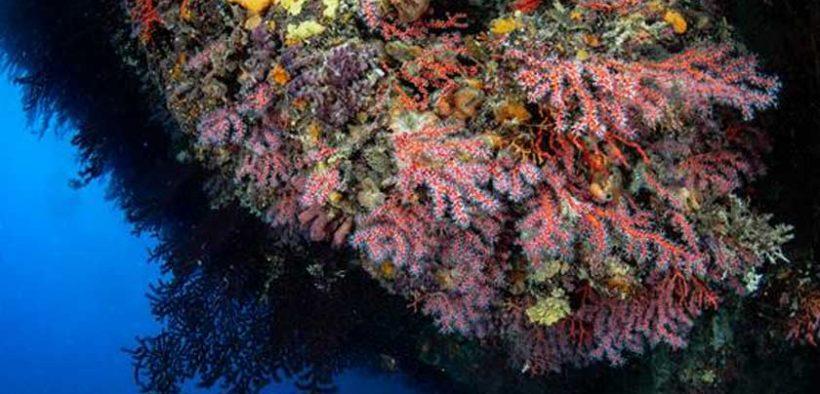 The future of precious red coral in the Mediterranean