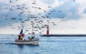 EMFAF TO SUPPORT SUSTAINABLE OCEANS