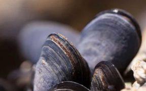 SCOTTISH FARMED SHELLFISH PRODUCTION DROPS