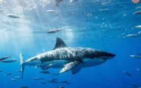 SHARK AWARENESS DAY 14th JULY 2021