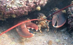 ISLE OF MAN CRAB AND LOBSTER (1)