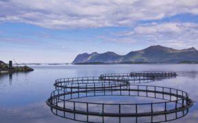 Scottish aquaculture review underway
