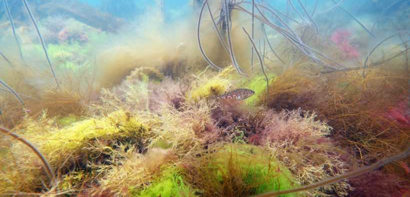 MPAS CAN BOOST FISH POPULATIONS