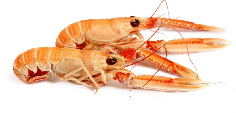 WORKING GROUP SETS OUT IMPROVEMENTS FOR LANGOUSTINE
