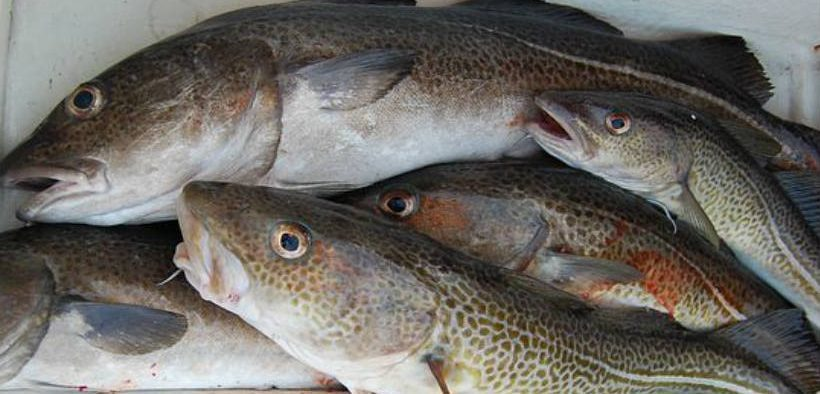 FISHING BUSINESS AT RISK