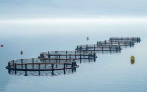 NEW PROJECT TO MODEL SALMON FARMS'
